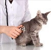 Ветеринарные клиники в Восточном